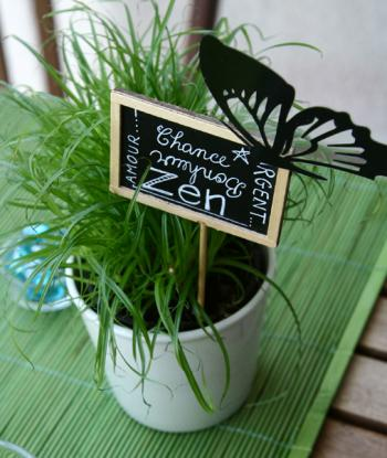 Pot Fleurs Decoratif Mini Jadin D 39 Int Rieur Pinterest